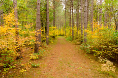 Big Oak Loop trail (Wicked Dark Photography) Tags: landscape wisconsin autumn fall foliage forest nature path trail trees woods