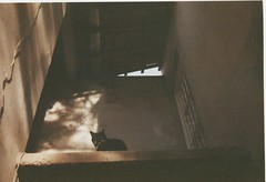 Pantera (Tai Moura) Tags: fujicolor fuji expired expiredfilm filme filmexpired filmevencido vencido press800 fujipress800 iso800 brasil brazil amateur flowers peoples skate light luz rebel2000 eos300 canon canonrebel2000 2
