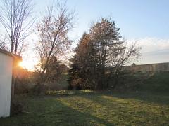 Sunlight (creed_400) Tags: belmont west michigan december winter sun sunlight trees