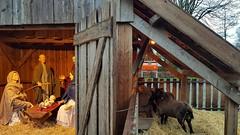 Kerststal in Hooge Mierde (Geertje Anja) Tags: kerststal hoogemierde noordbrabant christmas kerst schapen sheep mailbox brievenbus netherlands krippe nativityscene