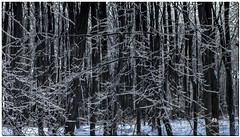FEBRUARY 2016  NM1_8081_007863-2-222 (Nick and Karen Munroe) Tags: ice icecrystals icestorm icejewels icesculptures icefog icicles winter wintry winterwonderland wintertrees winterstorm winterfog weather weatherevent storm snow snowfall snowstorm snowy fog foggy mist misty fogpatches forest tree trees woods hike trail hiking forests wood natural karenick23 karenick karenandnickmunroe karenandnick munroe karenmunroe karen nickandkaren nickandkarenmunroe nick nickmunroe munroenick munroedesigns photography munroephotoghrpahy munroedesignsphotography nature landscape brampton bramptonontario ontario ontariocanada outdoors canada d750 nikond750 nikon blackandwhite bw blackwhite bandw monochrome mono nikon2470f28 2470 2470f28 nikon2470 nikonf28 f28