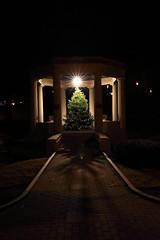 Christmas Tree (nicolemonsees) Tags: congresspark christmas christmaslights lights christmastree christmastreelights night winter saratoga saratogasprings nightphotography