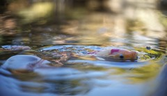 Goofing around (PeterThoeny) Tags: saratoga california siliconvalley sanfranciscobay sanfranciscobayarea southbay hakonegardens japanesegarden garden park pond lake water fish koi hunger food reflection day outdoors sony a7 a7ii a7mii alpha7mii ilce7m2 fullframe vintagelens dreamlens canon50mmf095 canon 1xp raw photomatix hdr qualityhdr qualityhdrphotography fav100