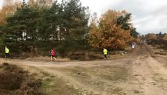 haarlerbergloop 10 km (58)