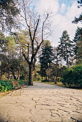 Trees in the park Canon T70 - Kodak 200 (daniel.danilovic) Tags: canont70 film kodak 200asa