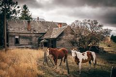 The Watchers (Pedalhead'71) Tags: abandoned desert hardman homestead horse house oregon rural heppner unitedstates us