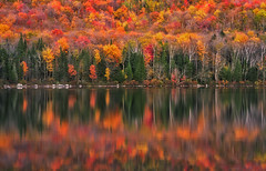 Nature on Steroids (Ania Tuzel Photography) Tags: groton vermont nature change reflections lake autumn fall colors mirror tree