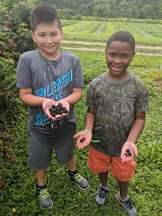 Berry picking at Pennypack Farm 2018