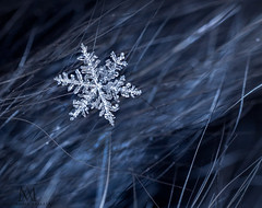 snowflake on a fur hat (marianna armata) Tags: snowflake winter ice crystal mariannaarmata macro