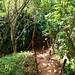 Way to Hideaways Beach Princeville Kauai Hawaii