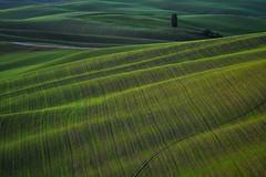 Rolling Hills in Tuscany (Antonio Cinotti ) Tags: landscape paesaggio toscana tuscany italy italia siena hills colline campagnatoscana cretesenesi asciano nikon nikond500 d500 tamron tamron150600
