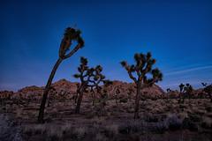 untitled (12 of 28).jpg (xen riggs) Tags: desert california joshuatreenationalpark february2018