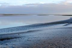 Solitary heron. Cumbrian coastline - Leven estuary (timnutt) Tags: woodland xt2 conishead coastline priory coastal fuji cumbria coast 35mm fujifilm 35f2wr