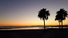 Quiet evening (bruno_mesmin) Tags: frenchriviera seascape cotedazur mermediterranée sunset sunlight palmtree palmier