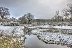 Sodden (ArtGordon1) Tags: hollowpond hollowponds london england uk winter january 2019 davegordon davidgordon daveartgordon davidagordon daveagordon artgordon1