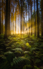 Sunburst In The Woods (Photography Revamp) Tags: green scotland woods woodland linlithgow uk nature nationalpark nikon d750 sunsent