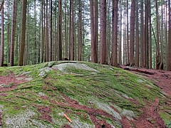 Rock and moss and trees and sky (walneylad) Tags: princesspark northvancouver britishcolumbia canada park parkland urbanpark woods woodland forest rainforest urbanforest trail path trees rock moss ferns log stump january winter nature scenery view