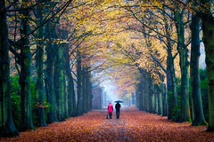 Elswout (alowlandr) Tags: trees autumn walking dog rearview footpath twopeople rain weather nature land realpeople elswout overveen treelined outdoors