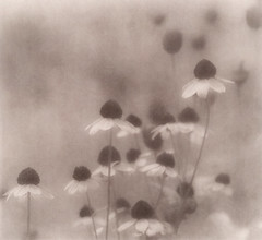 Faded (Southern Darlin') Tags: art photography flowers texture brushes romance photoshop