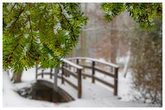 Joyeux Noël (Pascale_seg) Tags: paysage landscape nature natura pont pontenbois forêt neige snow arbres neve trees sapin christmastree hiver winter inverno lorraine moselle grandest france nikon