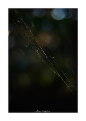 2018/12/1 - 9/15 photo by shin ikegami. - SONY ILCE‑7M2 / Carl Zeiss C Sonnar T* 1.5/50 ZM (shin ikegami) Tags: マクロ macro spiderline 蜘蛛の巣 sky 空 井の頭公園 吉祥寺 autumn 秋 sony ilce7m2 sonyilce7m2 a7ii 50mm carlzeiss sonnar csonnar50mmf15 tokyo sonycamera photo photographer 単焦点 iso800 ndfilter light shadow 自然 nature 玉ボケ bokeh depthoffield naturephotography art photography japan earth asia