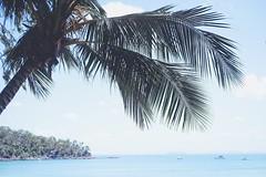 Island Escape (Bron.Wolff) Tags: calm scenery palmtree sand ocean oc nature landscape relax chill australia beach beautiful island