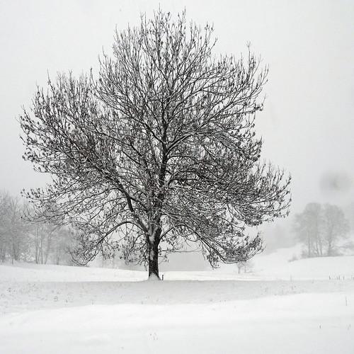 C'est beau un arbre en hiver