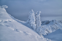 Eingeschneite Bäume am Hahnenkamm (stefangruber82) Tags: alpen alps winter tirol tyrol snow schnee trees bäume