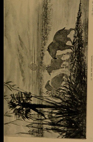 This image is taken from Page 81 of Twenty-five years in British Guiana