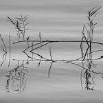 Orderly and Random Reflections thumbnail