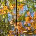 Herbst an der Alb - 4