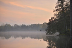 Mist of light / Brume de lumière (François NOËL) Tags: lake morning reflection calm autumn trees tones pink serenity bird sky sunrise milvus1485 zeiss