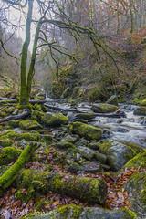 Birks of Aberfeldy (rjonsen) Tags: nature river burn gorge tree moss long exposure perth kinross scotland alba