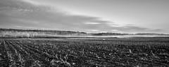 Ile d'Orléans, Québec, Canada (Tasmanian58) Tags: fog mist field corn agriculture bw nb noirblanc blackwhite monochrome forest orleans island vintage lens asahi takumar takumar28 3528mm sony a7ii