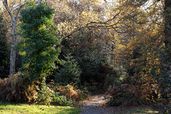 Out of the woods | Autumn in Hampstead-31 (Paul Dykes) Tags: hampstead london uk unitedkingdom gb england autumn