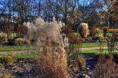 02-Britzer Garten_181116_N- 01 (sigkan) Tags: deutschland berlin britzergarten hdr nikond700 nikon2485mmf284
