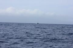 IMG_6886 (avsfan1321) Tags: maui hawaii usa unitedstates unitedstatesofamerica ocean pacificocean breach whale whalewatching humpbackwhale