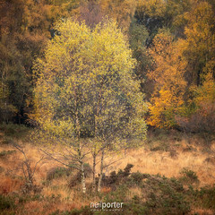 The Heath (www.neilporterphotography.com) Tags: heath tree autumn wood heathland devon