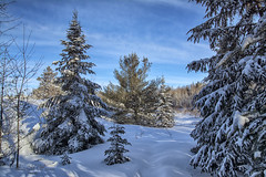 In The Good Ole` WinterTime (Lindaw9) Tags: trees snow blueskies winter january