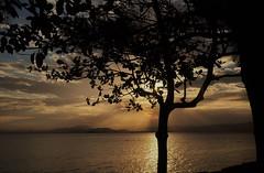 por uma maravilhosa semana!!! (Ruby Ferreira ®) Tags: silhuetas silhouettes branches árvore tree bay baía montains montanhas ray san areia beach praia