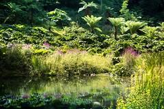 France, Bretagne, Finistère, Brest ️Picture by Raphaël Bénard © (benard-raphael) Tags: landscaping landscapes landscapelover landscape nature jardin botanique garden botanic botanicgarden naturelover green vert