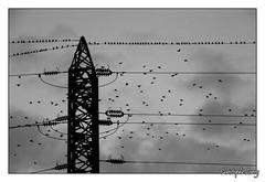 Photo de 2008. (christophe.leroy19) Tags: noiretblanc noirblanc nb blackandwhite blackwhite bw oiseaux bird birds oiseau