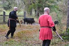 EEF_7682 (efusco) Tags: boar medieval spear brambleschoolearteofthehunt bramble schoole military arts academy florida ferel hog pig