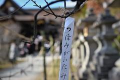 ✪初詣 京都北野天満宮➁ (haguronogoinkyo) Tags: nikon d610 japan kyoto 京都 北野天満宮 天神 初詣 神社 梅