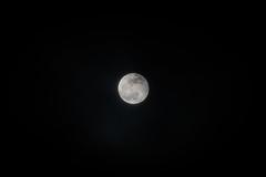 Full Moon (Tony Webster) Tags: minnesota superbloodwolfmoon tonywebster eclipse lunareclipse moon superblood supermoon wolfmoon eastlake unitedstatesofamerica us