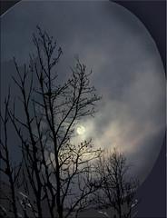Moonlight (timeinabox) Tags: moonlight trees photoshop timeinabox