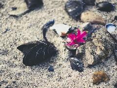 Color Beach Bokeh - Fehmarn - 5. Februar 2019 - Schleswig-Holstein - Germany (torstenbehrens) Tags: olympus ep5 7xef53213mm f28 color beach bokeh fehmarn 5 februar 2019 schleswigholstein germany