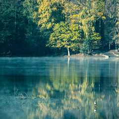 Heron, Lake and Trees (Tobias Schulte) Tags: heron fischreiher bird vogel wasser water trees bäume reflection reflektion spiegelung mirror image autumn herbst fall yellow color colorful bunt gelb mist myst dunst nebel sunrise sonnenaufgang early morning früh morgens landscape landschaft lake see