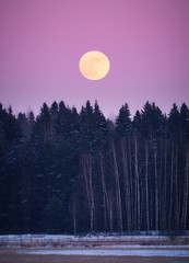 Moon above the forest at night (Digikuvaaja) Tags: atmosphere background beautiful blue color dark dawn dramatic dusk evening fantasy fear glow gothic halloween haunted landscape light magic midnight moon moonlight mysterious mystery natural nature night nobody outdoor outdoors peaceful scene scenery scenic season silhouette sky spooky sundown tranquil travel trees twilight vacation water weather yellow stockphoto fullmoon