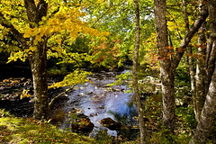 A calm Indian Summer Day (klauslang99) Tags: klauslang nature naturalworld northamerica summer camerons lake provincial park water river trees leaves canada nova scotia landscape forest wood